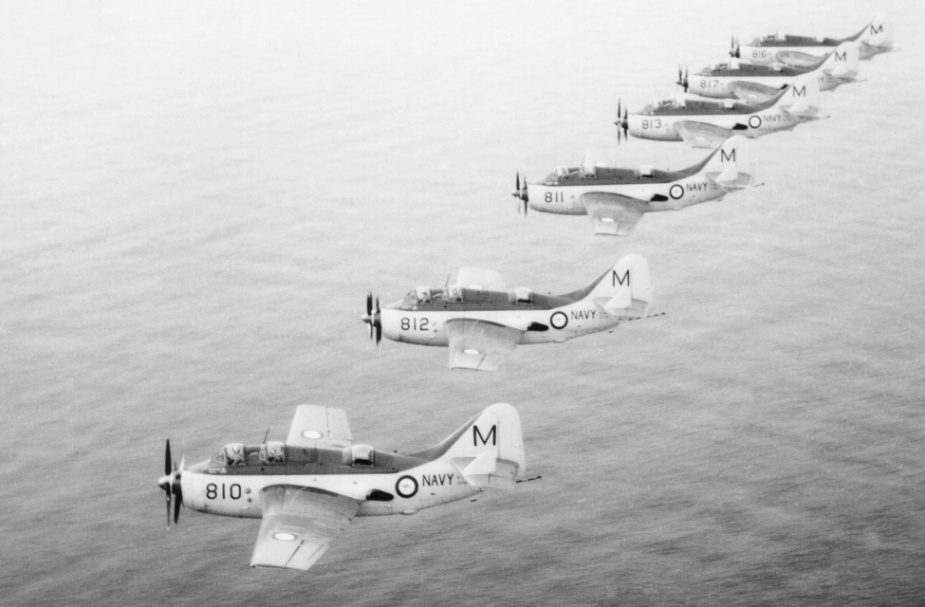 Gannets in formation.